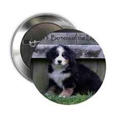 "Bernese Mountain Dog 2013 Calendar 2.25"" Button"