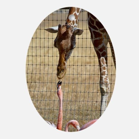 Giraffe and Flamingo Oval Ornament