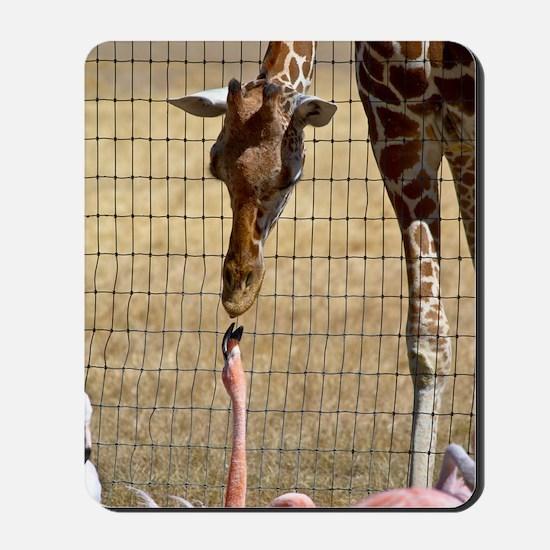 Giraffe and Flamingo Mousepad