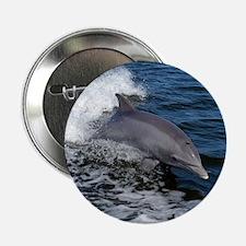 "Bottlenose dolphin 2.25"" Button"