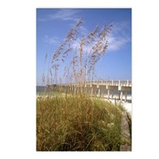 Sea Oats Postcards (Package of 8)