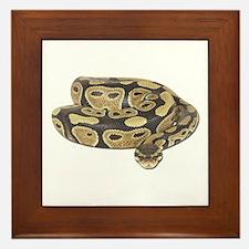 Ball Python Photo Framed Tile