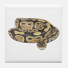 Ball Python Photo Tile Coaster