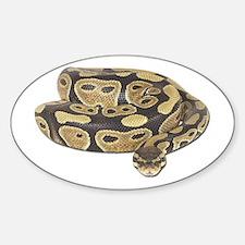 Ball Python Photo Oval Decal