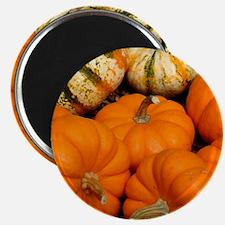 Pumpkins in a basket Magnet