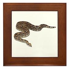 Boa Constrictor Photo Framed Tile