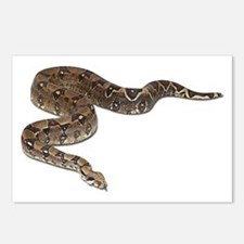 Boa Constrictor Photo Postcards (Package of 8)