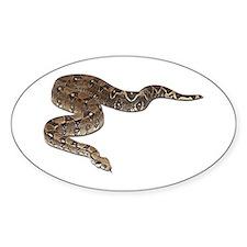 Boa Constrictor Photo Oval Sticker