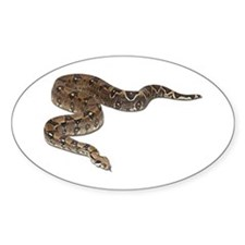 Boa Constrictor Photo Oval Decal