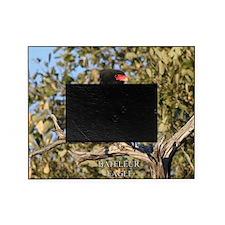 Bateleur Eagle Picture Frame