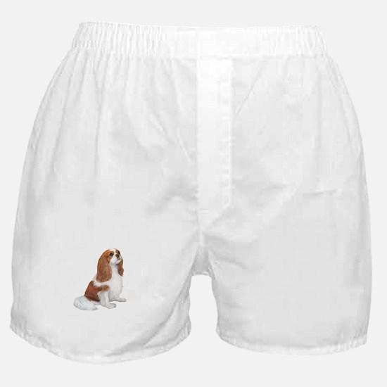 Cavalier (blenheim A) Boxer Shorts