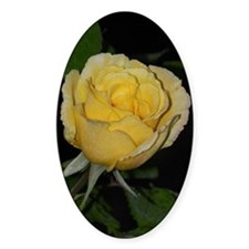Yellow Rose of Texas Decal