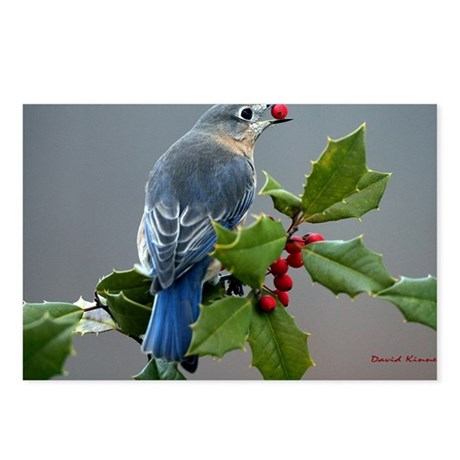 Bluebird and Holly Postcards (Package of 8)