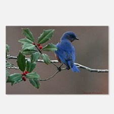 Bluebird in Holly Postcards (Package of 8)