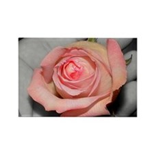 Rose in hand 5x7 Rectangle Magnet