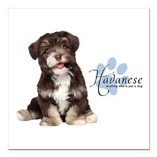 "Havanese Puppy Square Car Magnet 3"" x 3"""