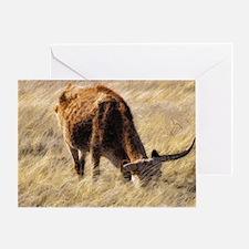 lone steer Greeting Card