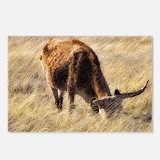 lone steer Postcards (Package of 8)