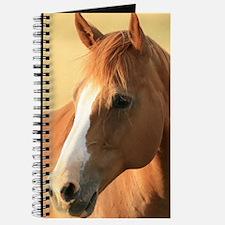 horse portrait IP Journal