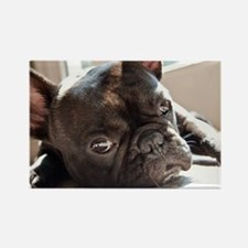 frenchie Rectangle Magnet