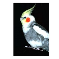 GRAY AND WHITE COCKATIEL Postcards (Package of 8)
