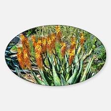 firey orange aloe Decal