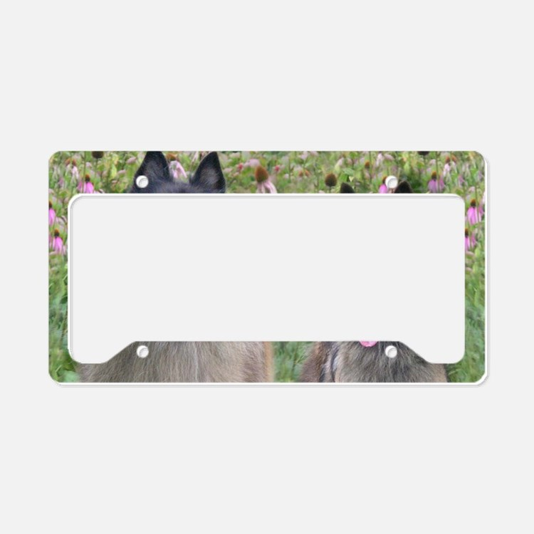 Terv Tray Small License Plate Holder