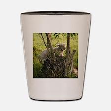 King of the Stump Shot Glass