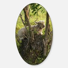 King of the Stump Sticker (Oval)