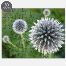 Great Garden Balls of Fire  Puzzle
