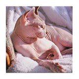 Hairless cat Coasters