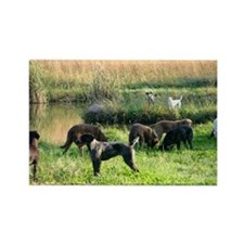 Hunting dogs Rectangle Magnet