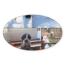 german wirehaired pointers Decal