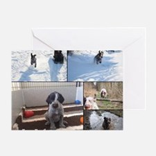 german wirehaired pointers Greeting Card