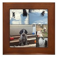 german wirehaired pointers Framed Tile