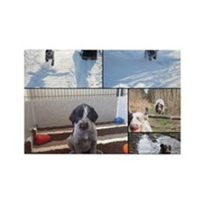german wirehaired pointers Rectangle Magnet