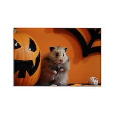 Hamster 10 Rectangle Magnet