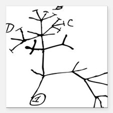 "Darwin Tree Square Car Magnet 3"" x 3"""