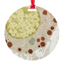Basophil white blood cell, TEM Ornament