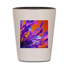 African lily (Agapanthus sp.) Shot Glass