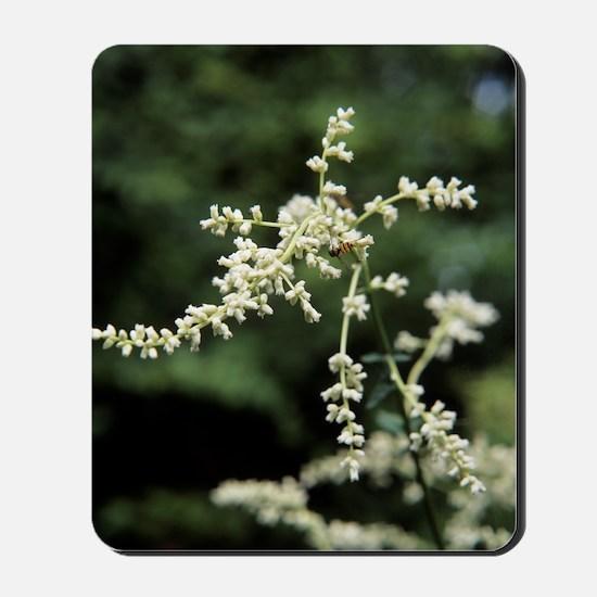Artemisia flowers Mousepad