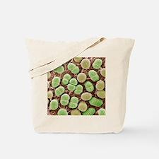 Algae, SEM Tote Bag
