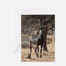 Sable 3110-125 Greeting Card