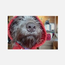 Puppy as Red Riding Hood Rectangle Magnet