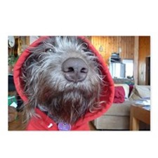 Puppy as Red Riding Hood Postcards (Package of 8)