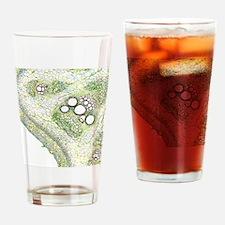 Cucurbita plant stem, light microgr Drinking Glass