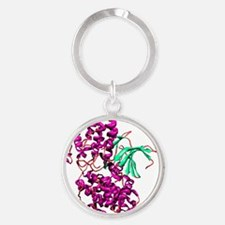 Cyclin-dependent kinase 2 enzyme Round Keychain