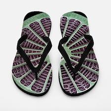 Diatom, SEM Flip Flops