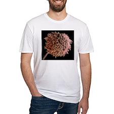 Fungal spores, SEM Shirt