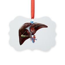 Liver anatomy, artwork Ornament